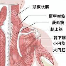 頚部の筋肉